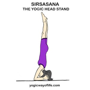 Sirsasana_Head_stand_Yogic_Pose_Asana
